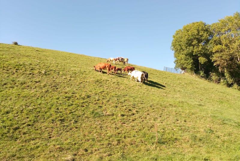 Tracabilite des vaches